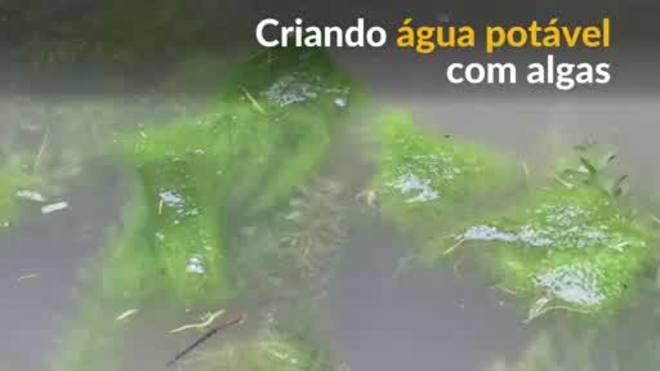 Cientistas criam filtro de papel feito de alga que torna água suja potável