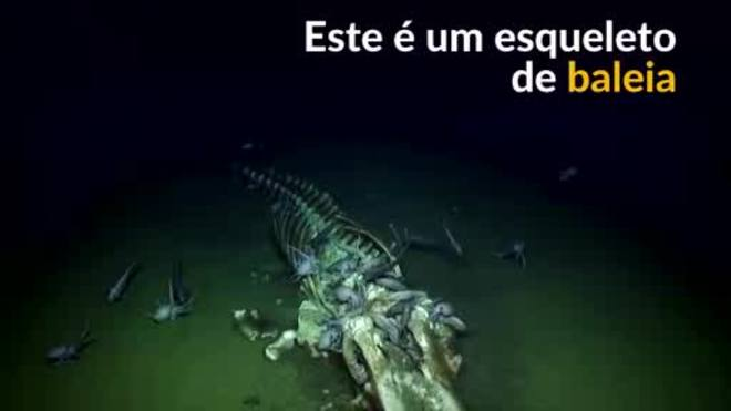 Esqueleto de baleia é encontrado no fundo do mar na Califórnia