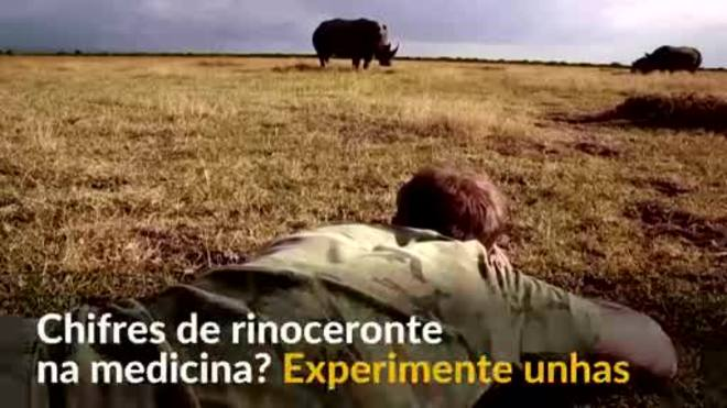 Fotógrafo coleta unhas para salvar rinocerontes. Entenda