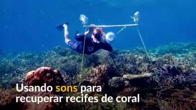 Acústica subaquática pode ajudar na restauração dos recifes de coral