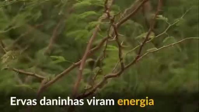 População da Etiópia transforma ervas daninhas em energia