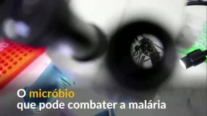 Micróbio que pode frear malária é encontrado no Quênia