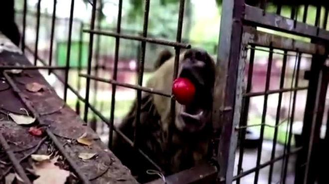 Após três anos em jaula minúscula, Urso Teddy terá uma vida melhor