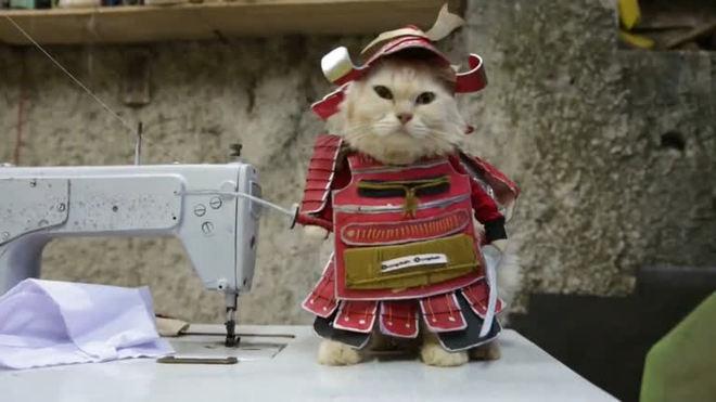 Fantasias para gatos, a nova moda na Indonésia