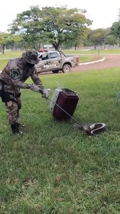 Polícia ambiental resgata cobra achada em clube de Brasília (DF)