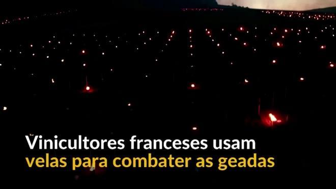 Vinicultores franceses usam o calor de velas para combater as geadas