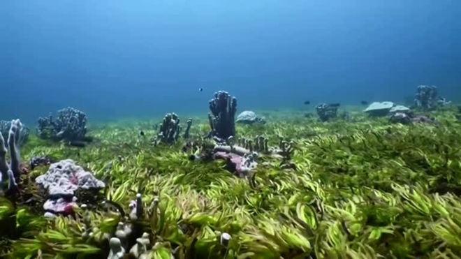Imagens raras do maior campo de ervas marinhas do mundo
