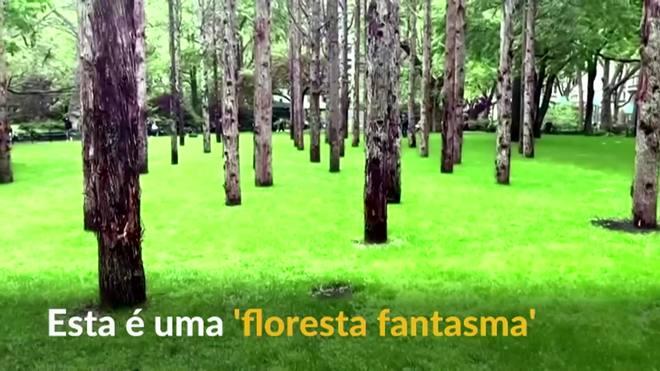 Artista planta 'floresta fantasma' no Madison Square Park, nos EUA