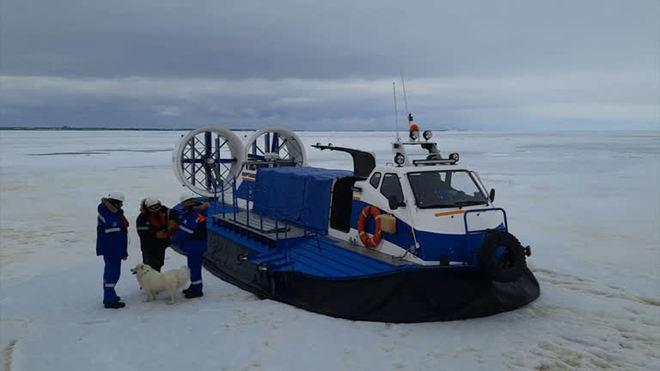 Cachorrinha se perde e vai parar no mar congelado na Rússia