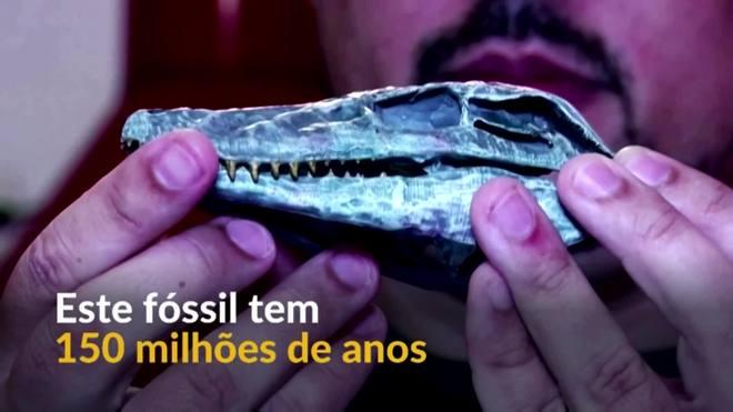 Fóssil de crocodilo de 150 milhões de anos é descoberto no Chile