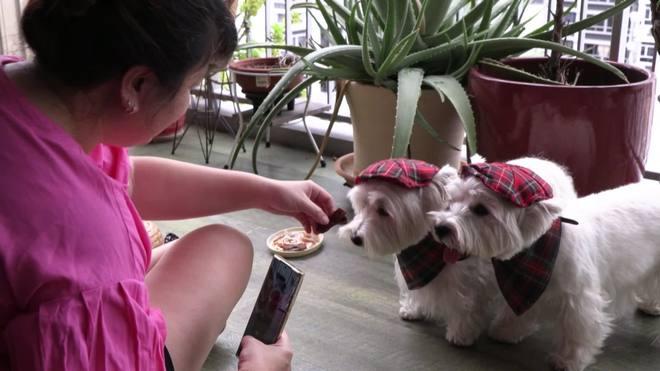 Cães influenciadores ganham fama em perfis das redes sociais