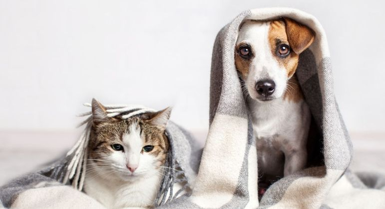 10 cuidados essenciais com os pets no inverno