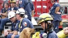 Bretagne, a heroína de quatro patas que trabalhou no 11 de setembro
