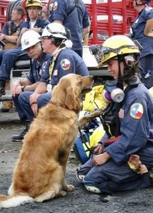 Bretagne trabalhou por 10 dias para localizar vítimas entre os escombros