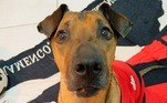 12, cachorro flamengo,