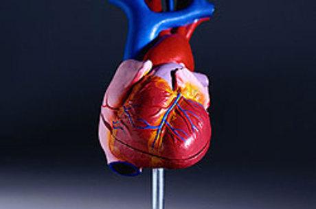 Pessoas estudadas tiveram uma redução de quase 40% no risco de desenvolverem alguma doença coronariana