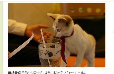 """Mania surgiu com as """"cafeterias de gatos"""", como a Neko no mise"""