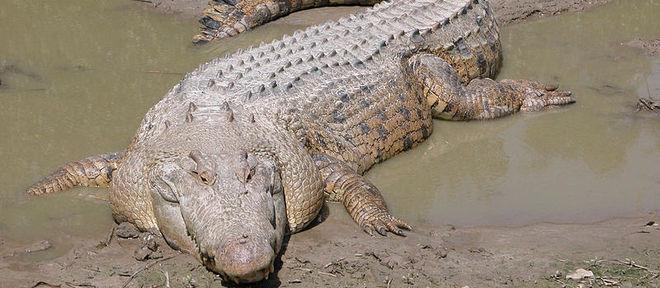 Crocodilo atacou o jogador do Atlético Mineiro Tete no rio Zambeve, em Moçambique