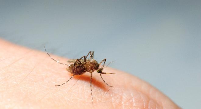 Pessoas que tiveram dengue podem ser resistentes ao vírus Zika