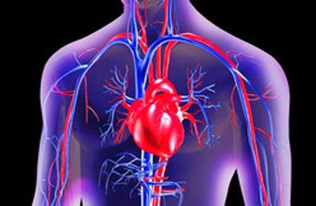 Procedimento envolveu inserção de catéter na região da virilha até o coração para injeção de álcool