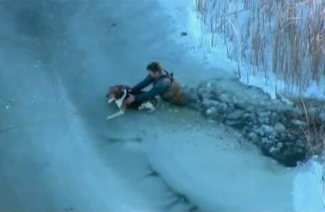 Oficial tentou manter o animal aquecido até a chegada do barco de resgate
