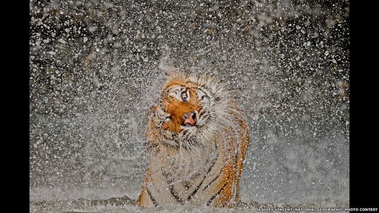Ashley Vincent/National Geographic Photo Contest