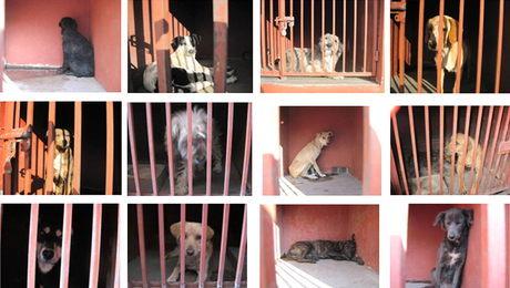 Os cachorros capturados usavam cavernas e fendas como tocas