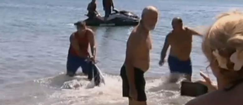 Um tubarão nadando próximo aos banhistas causou confusão em praia na Austrália