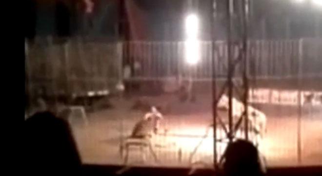 Vídeo divulgado na internet mostra o momento em que um tigre ataca o seu treinador durante uma apresentação