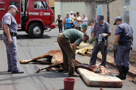 Animal passava ao lado de um terreno baldio quando foi atacado