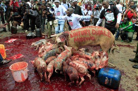 Manifestantes usam porcos para protestar contra deputados no Quênia