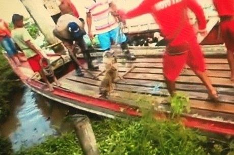 Animais são amarrados e colocados no porão de um barco