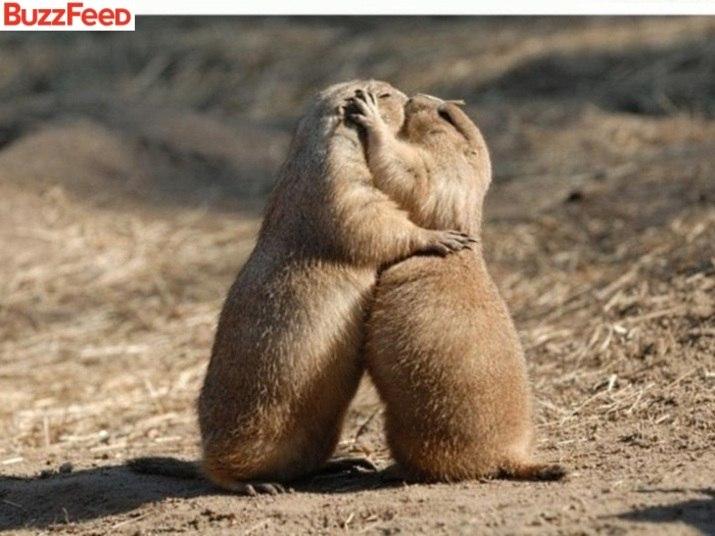 Resultado de imagem para imagens de animais namorando
