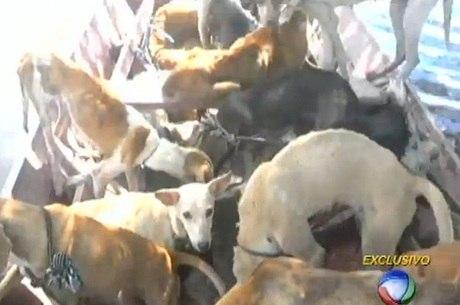 Cães resgatados chegaram a ficar até duas semanas sem comer
