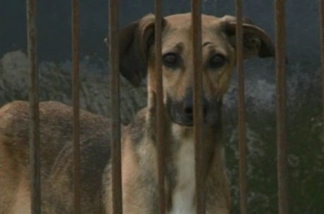 Unidade recebe cães abandonados pelos donos