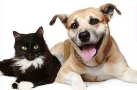 Há animais adultos e filhotes, tratados, vacinados e castrados