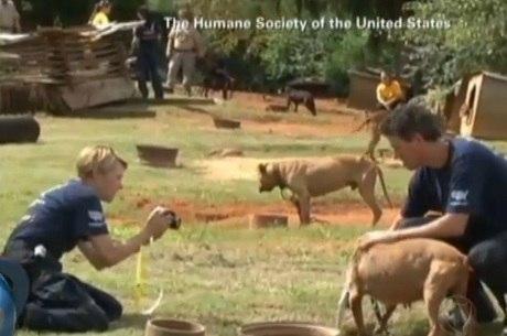 Os cães serão mantidos nas instituições para serem utilizados como evidência durante os julgamentos, mas serão doados no futuro