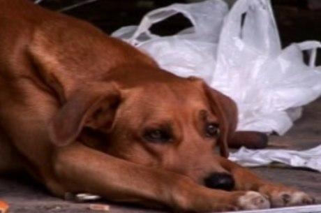 Cachorro que pode ter sido estuprado por morador do DF ficará sob os cuidados da polícia