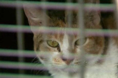 Os gatos ficarão juntos com outros seis, que foram resgatados por vizinhos. A expectativa é que em breve eles possam ser adotados