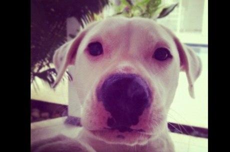 José Loreto está animado com novidades sobre a cachorra Brisa