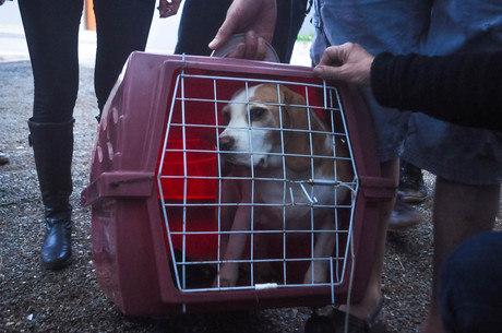 Mais de 200 animais foram levados de instituto na noite de ontem