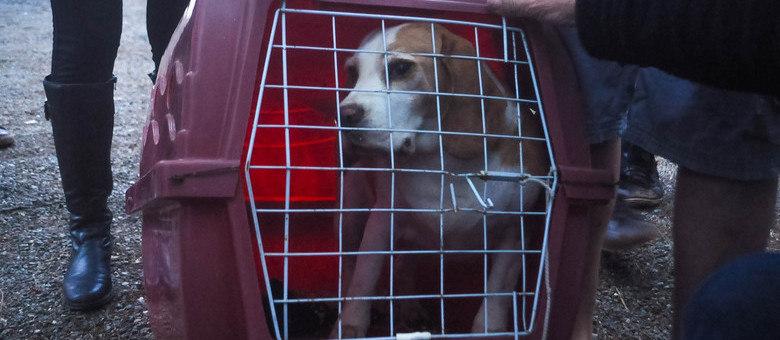 Animal resgatado nesta sexta-feira (18), em São Roque, São Paulo