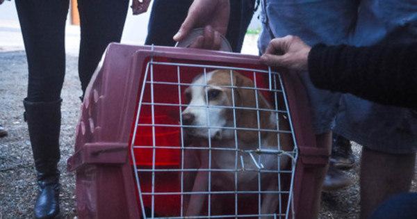 Instituto suspeito de maus-tratos a cães está em situação regular, afirma Conselho