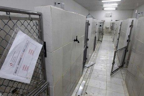 178 beagles viviam no Instituto Royal, em São Roque, interior de SP