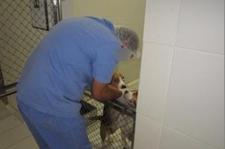 """Parecer técnico destaca """"manipulação carinhosa dos cães"""" como forma de facilitar a administração de substâncias"""