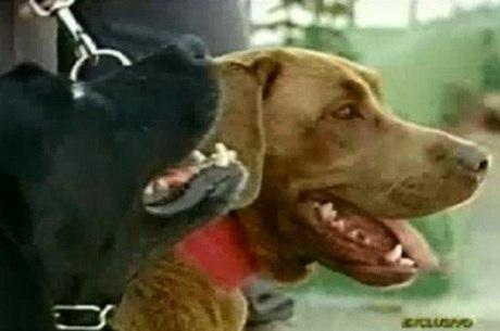 Os três animais que sobreviveram foram doados