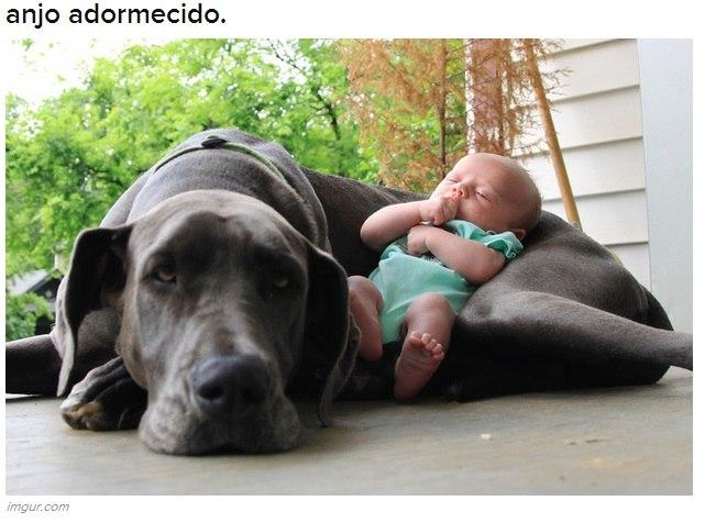 Amizade animal! Imagens denunciam momentos de amor e carinho