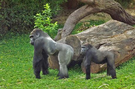 Primatas serão retirados da área de visitação