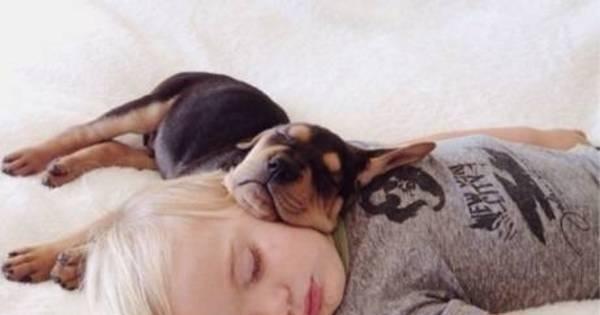 Descubra mais detalhes sobre Beau e Theo, bebê e cachorrinho que só dormem se estiverem juntos