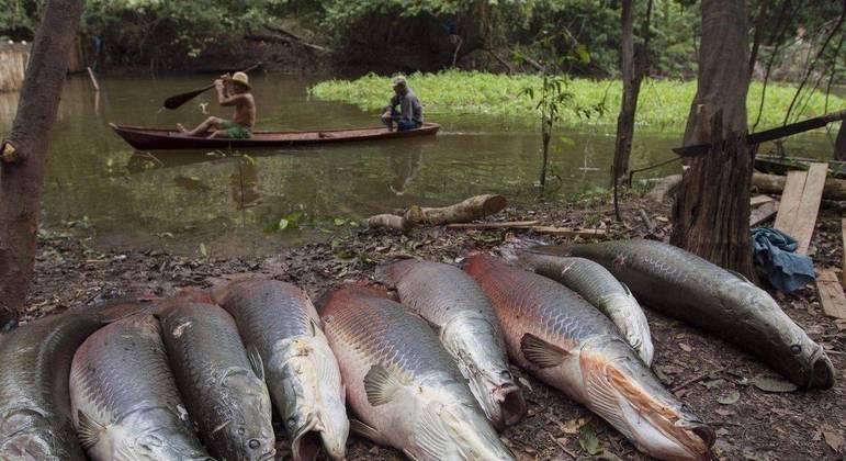 PF prende três pessoas no Porto de Manaus com três toneladas de pirarucu proibido